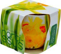 Świeca Szklanka Zapachowa - Narcissus