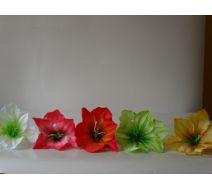 Kwiat Wyrobowy Amarylis